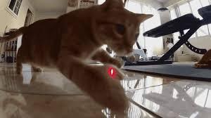 300mwレーザーポインター猫用